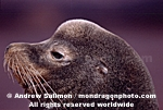 California Sea Lion photos