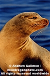 California Sea Lion pictures