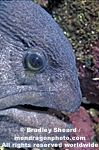 Wolf-Eel images