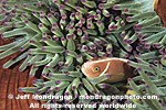 Pink Anemonefish images