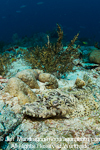 Crocodile fish pictures