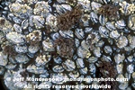Mussel Bed pictures