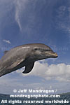 Bottlenose Dolphin photos