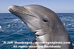 Bottlenose Dolphin Portrait photos