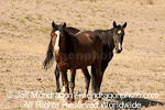 Wild Horse pictures