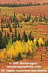Fall Colors in Denali National Park photos