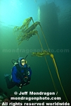 Diver and Bull Kelp pictures