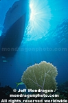Sea Fan and Dive Boat images