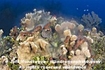 Coral and Sponges Spawning pictures
