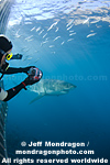 Diver in Shark Cage photos