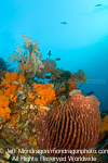 barrel sponge on Tropical Coral Reef photos