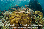 Tropical Fish on Coral Reef images